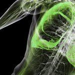 המדריך לנשימה מעגלית ולחץ תוך ביטני בשביל כוח